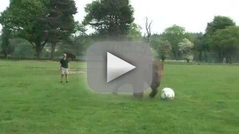 Baby Elephant Playing Soccer