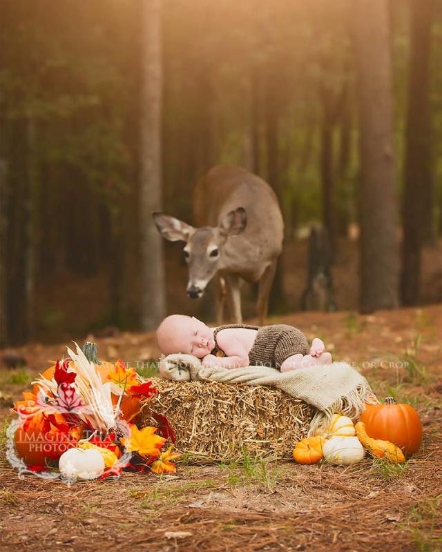 Deer Photobombs Baby