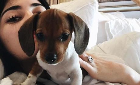 Kylie Jenner, Puppy