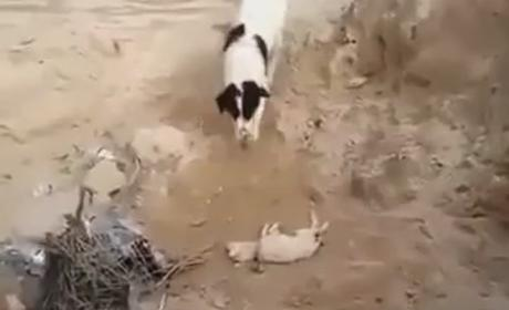Dog Buries Puppy in Amazing Viral Video