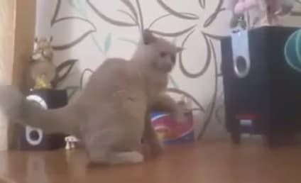 Cat Tries, Fails to Catch Bass From Speakers, is Awesome