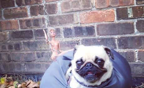Pug Dresses Up Like Wrecking Ball, Wins World Wide Web