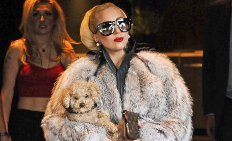 "PETA Slams ""Turncoat"" Lady Gaga Over Furry Pics"