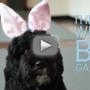 Bo Obama Announces White House Easter Egg Hunt!