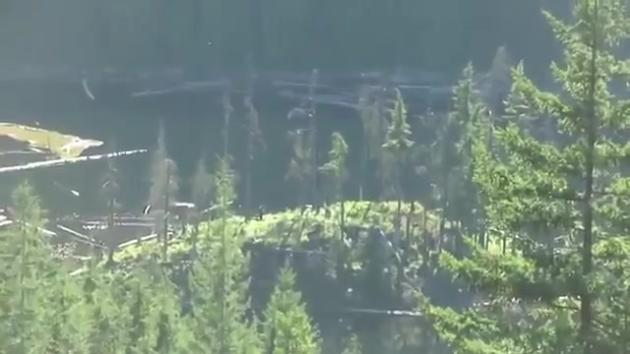 Bigfoot Sightings In Canada Real Or Fake The Hollywood
