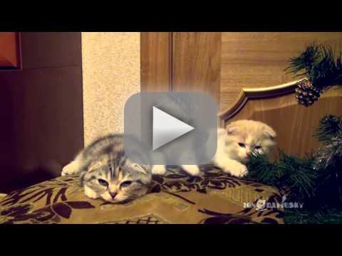 Cats boredom in unanimity bluster to mangle internet