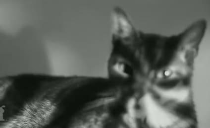 "Cats Sing Purrr-fect Version of Ariana Grande's ""Problem"""