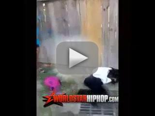 Sharkeisha Video