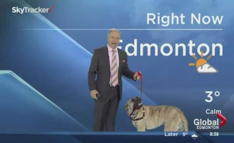 Weatherman Invites Dog on Set, Immediately Regrets It