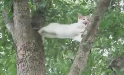 Mother Cat Rescues Kitten from Tree: I'm Coming for You!