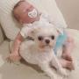 Courtney Stodden Dog Reborn Baby