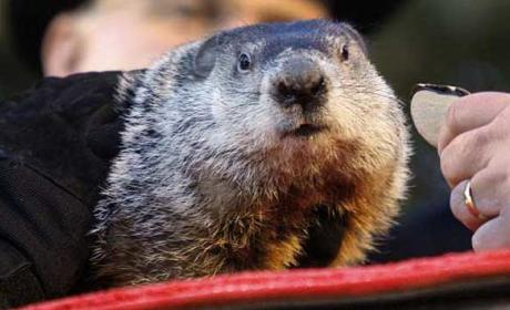 Punxsutawney Phil: Groundhog Day Weather King Set to Nail it This Year?