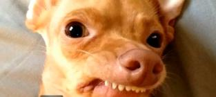 Tuna, Once-Abandoned Dog with Severe Overbite, Turns Into Viral Sensation