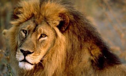 Lion Kills Woman Having Sex in Bush