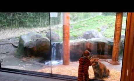 Tiger Wants to Play with Toddler