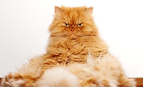 Garfi the Cat Goes Viral, May Be More Grumpy Than Grumpy Cat