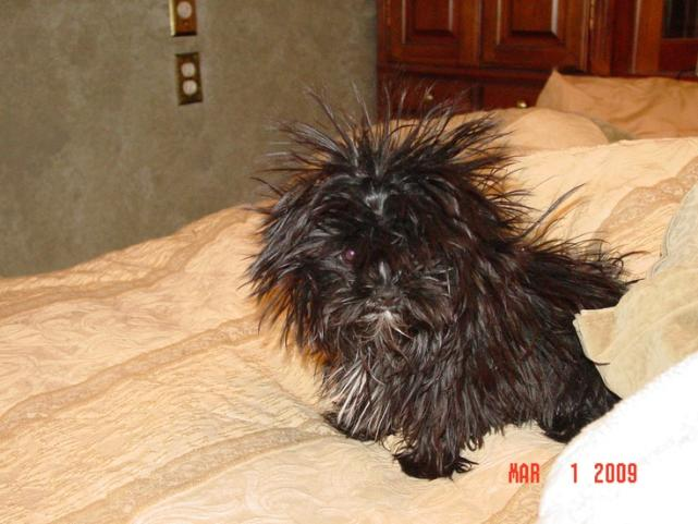 Dog or Porcupine?