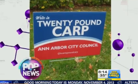 Carp Campaigns For City Council