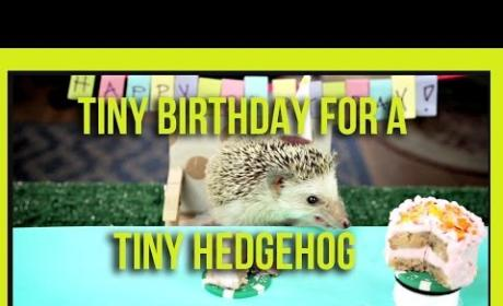 Woman Throws Birthday Party for Tiny Hedgehog, Pair of Hamsters