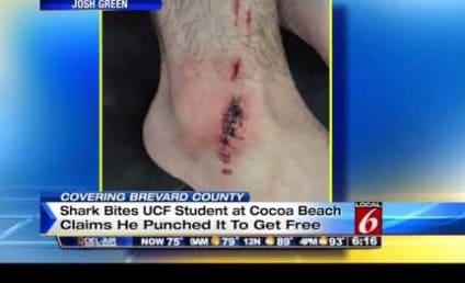 Florida Man Punches Shark That Bit Him