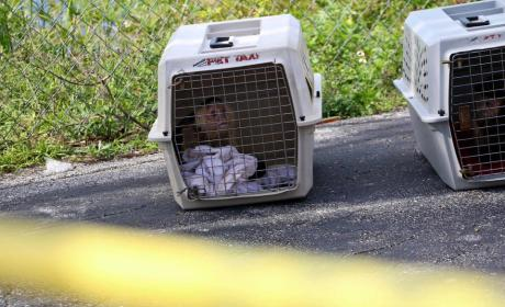 "Florida Woman's Body Found in Motel With Live Monkeys, ""Incoherent Man"""
