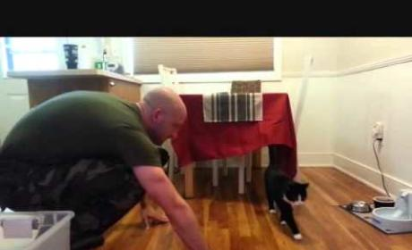 "LOL ALERT: Cats ""Welcome"" Home Military Owners"