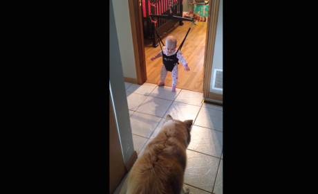 Dog Teaches Baby How to Jump in Cutest Video You'll See All Month