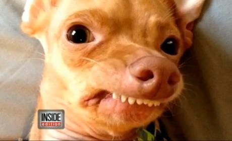 Meet Tuna the Dog!