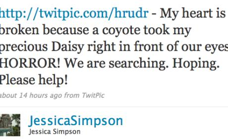 Jessica Simpson's Dog Daisy: Snatched By Coyote!
