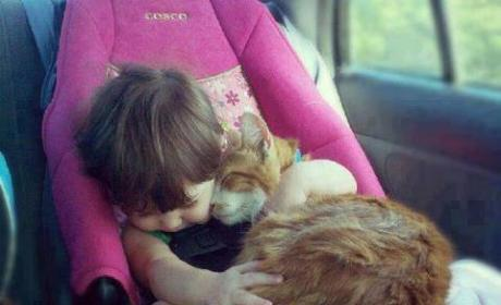 Kid and Cat Seat