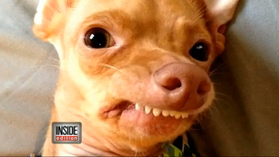 Tuna once abandoned dog with severe overbite turns into for Tuna fish for dogs