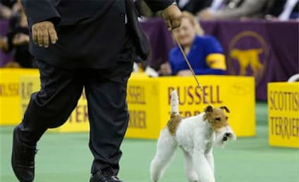 Westminster Dog Show Results 2014: Who Won Best in Show?!
