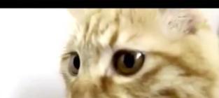 58 Crazy Cat Videos