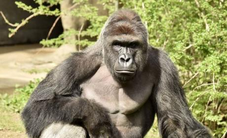 Mother of Child Who Fell Into Gorilla Enclosure Goes Off on Critics