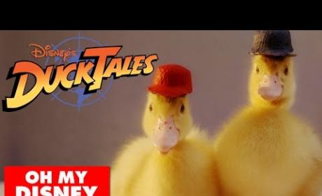 Duck Tales Theme Song With Actual Ducks