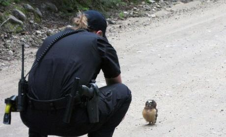 Baby Owl Stares Down Colorado Police Officer, Is Totally Chill
