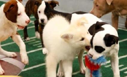 Puppy Bowl IX: Coming February 3!