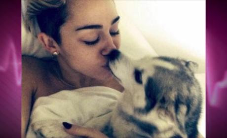 "Miley Cyrus Mourns Dead Dog, Is In ""Unbearable"" Pain"