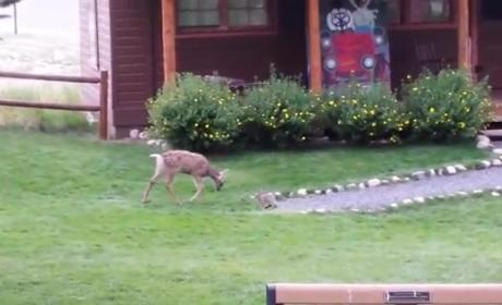 Real-Life Bambi and Thumper Come Close to Breaking the Internet