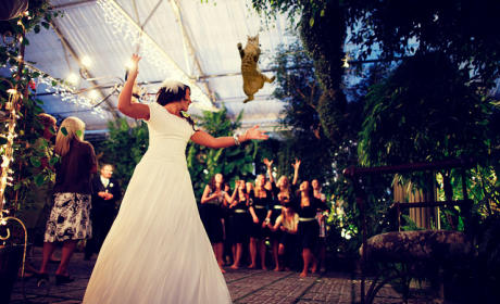 Bride Throwing Cat: Meme 5