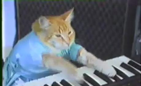 Keyboard Cat and Nyan Cat: Suing Warner Bros.!