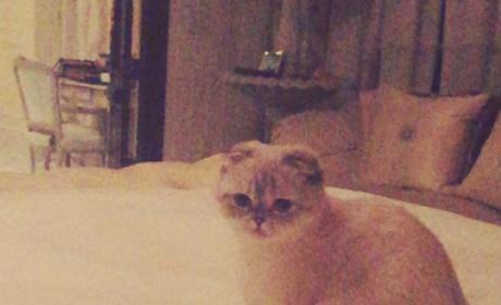 Taylor Swift & Cat: Super Bowl Reenactment