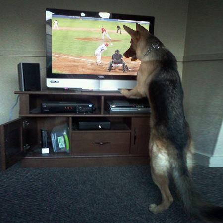 Unexpected Baseball Fan