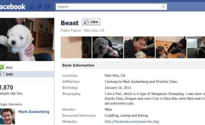 "Mark Zuckerberg Adopts Puppy, Gets 2K ""Likes"""