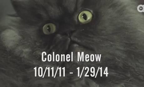 Colonel Meow Dead (R.I.P.)