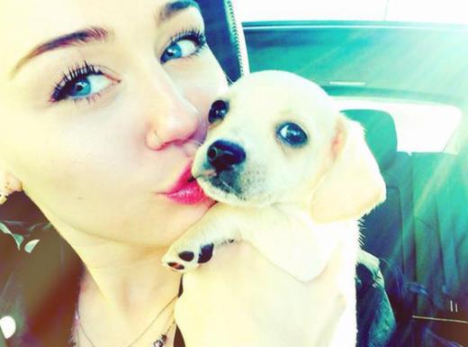 Miley Cyrus, Pet Dog