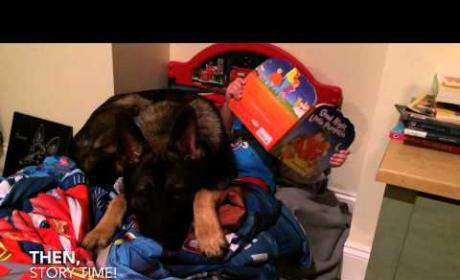 Toddler and German Shepherd's Bedtime Routine Will Blow You Away