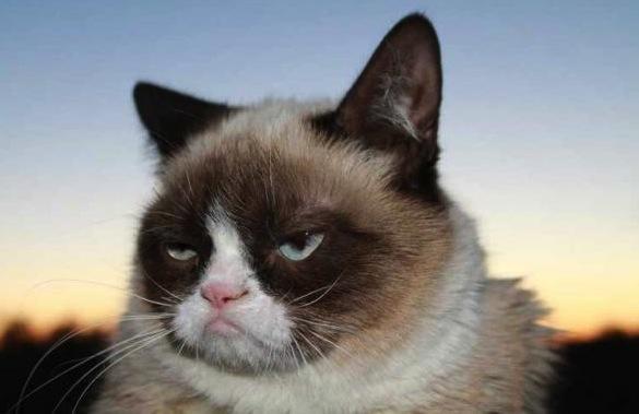 Grumpy Cat Pic