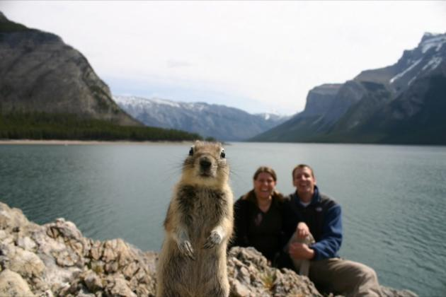 Squirrel Photobomb