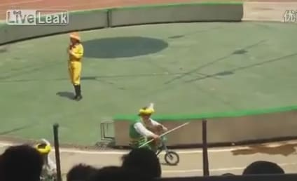 Bear-Monkey Bicycle Race Ends With Bear Eating Monkey in China